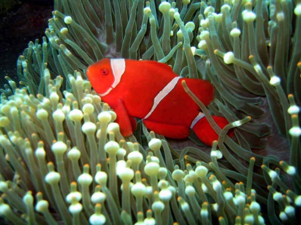 Tempat Snorkeling Paling Top di Bali (1/2)
