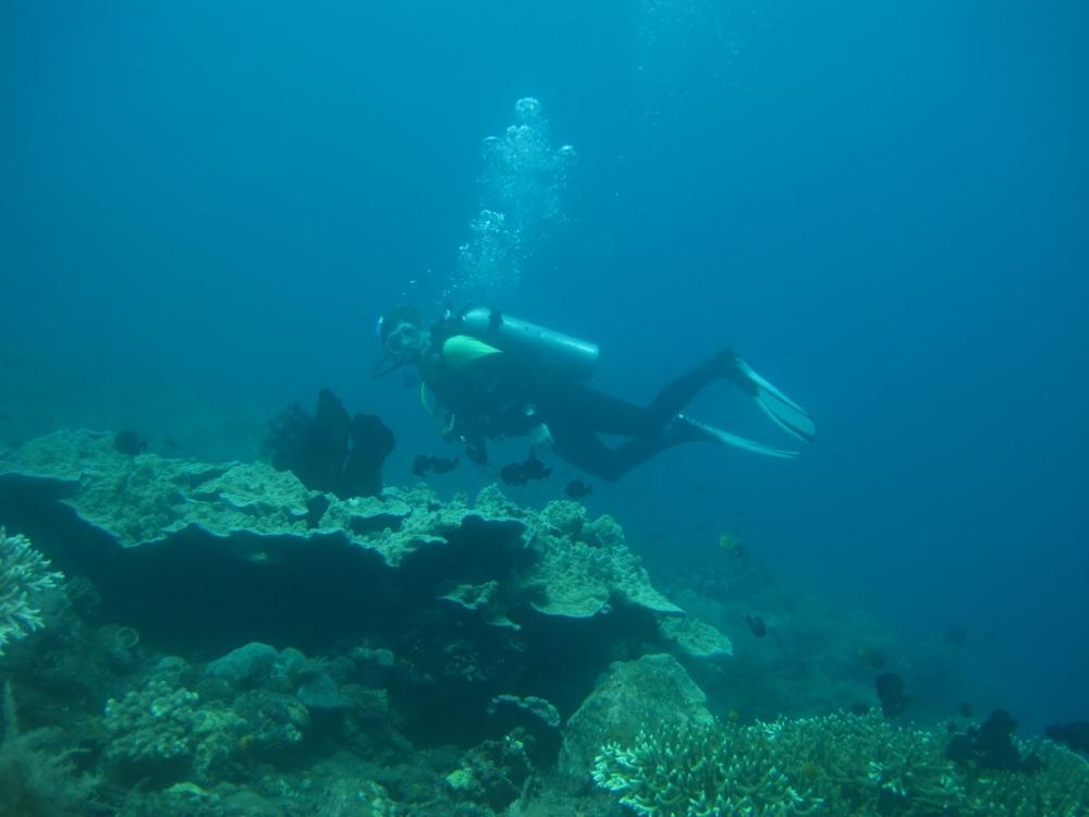 Mau Diving, Haruskah Bisa Berenang?