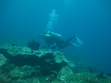 Explore Kubu Reef
