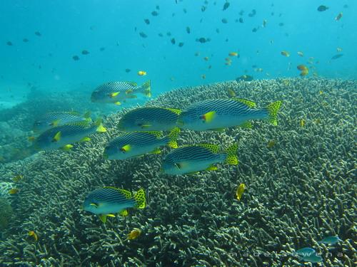 Tempat Snorkeling Paling Top di Bali (2/2)